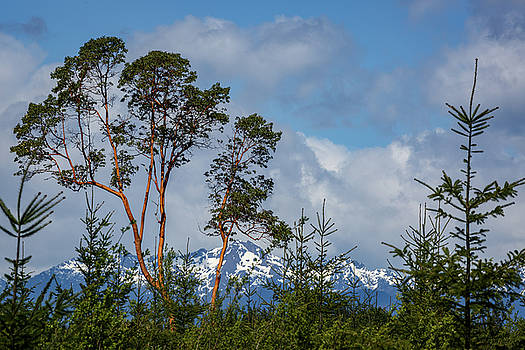 Mike Penney - Olympic Mountains 22