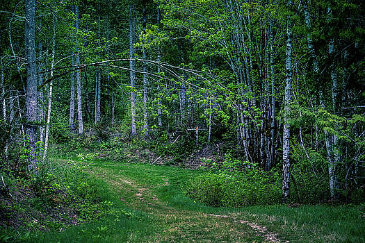 Mike Penney - Olympic Peninsula Woods 1