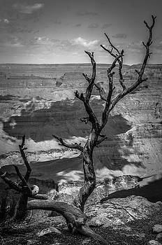 RicardMN Photography - On the edge of the Grand Canyon BW