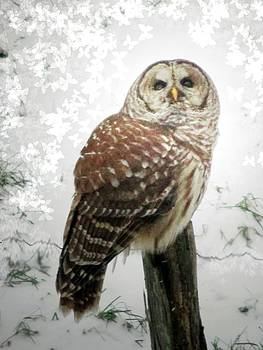 On This Snowy Day The Barred Owl Perches by Patricia Keller