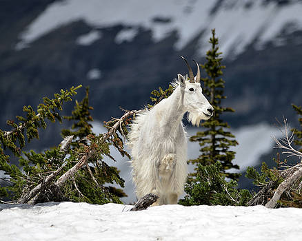 On Watch by Whispering Peaks Photography