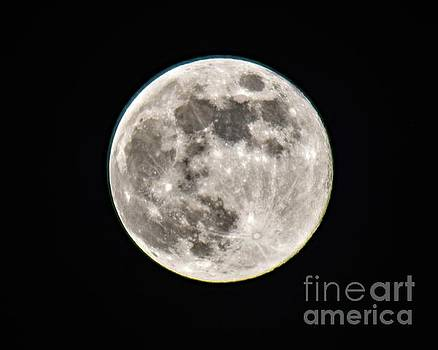 Once Believed That Birds Migrated To The Moon And Back  by Cindy Treger