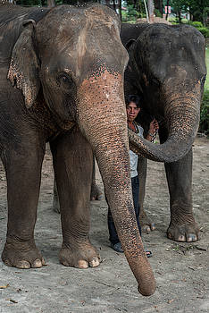One Man, Two Elephants by Ian Robert Knight
