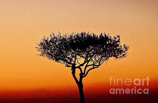 One Tree at Sunset by Craig Wood