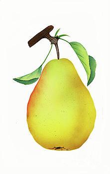 Nikki Vig - One Yellow Juicy Pear