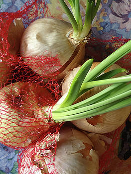 Onions 3 by Bruce IORIO