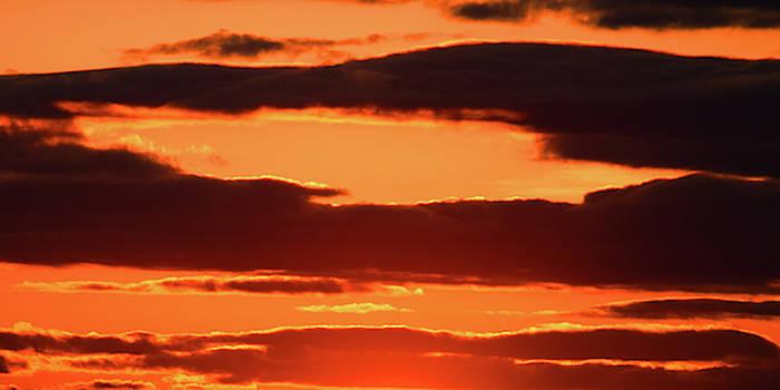 Orange and Black by William Selander