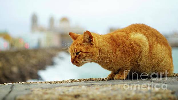 Orange Cat by the Sea by Pablo Avanzini