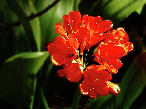 Vibrant Orange Flower by Alan Socolik