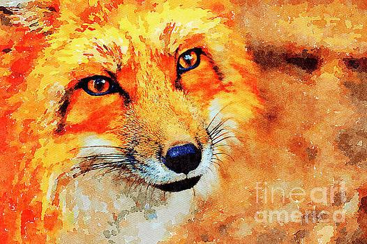 Orange Fox by Leon Woods