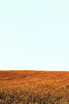 Orange by Jennifer Orhelys