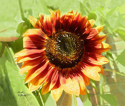 Orange Shaded Sunflower Painted by Sandi OReilly