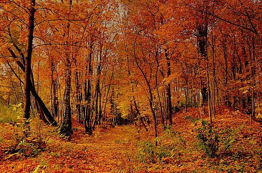 Henryk Gorecki - Orange silence