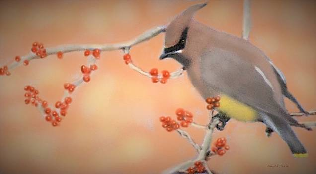 Orchard Waxwing by Angela Davies