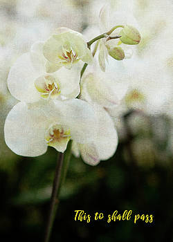 Rosette Doyle - Orchid 2