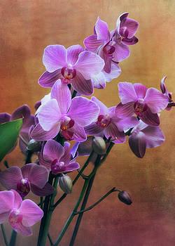 Rosette Doyle - Orchid 3