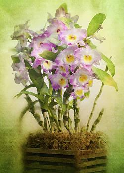 Rosette Doyle - Orchid 9