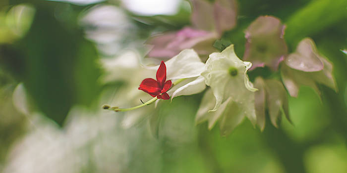 Jacek Wojnarowski - Orchid Flower Close up D