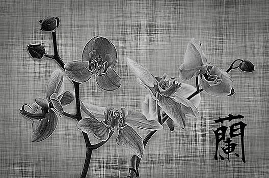 Orchid in Black and White by Andrea Swiedler