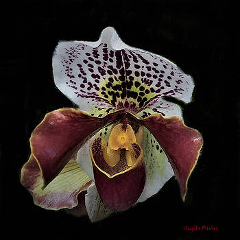 Orchid Show Beauty by Angela Davies