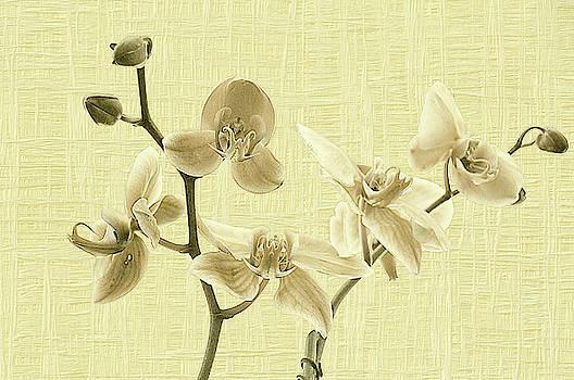 Orchids in Beige by Andrea Swiedler