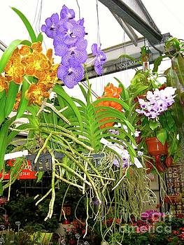 Orchids in Norway, on Display by Phyllis Kaltenbach