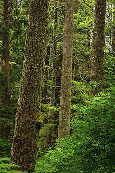 Mike Penney - Oregon Coast 18