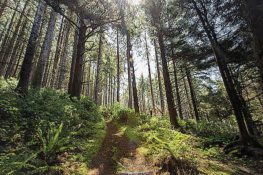 Oregon Coast Trail by Cathy Neth
