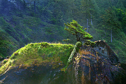 Oregon Coastline Solitary Tree by David Chasey