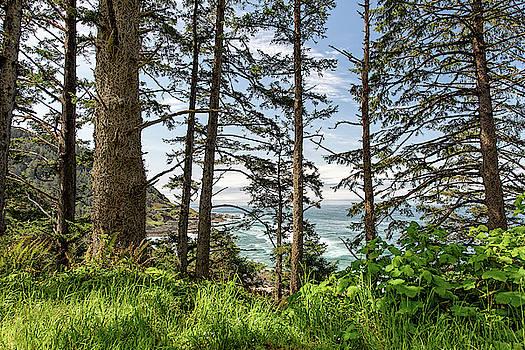 Oregon Coastline through the Pine Trees by Cathy Neth