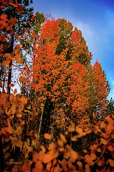 Oregon Mountain Aspen in Autumn by Mick Anderson