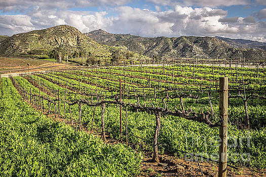 Orfila Vineyards and Winery by Edward Fielding