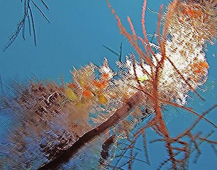 Susan Burger - Ornamental Coral