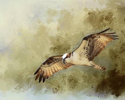 Osprey in Flight by Rebecca Cozart