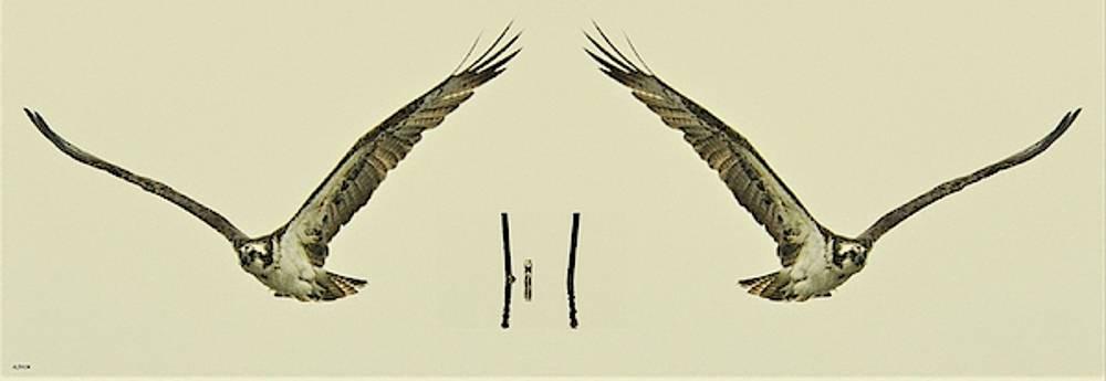 Osprey's Gone by John R Williams