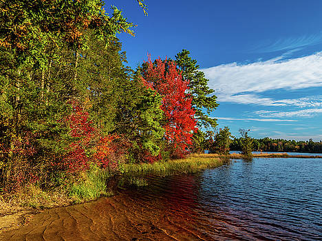 Louis Dallara - Oswego Lake Pinelands