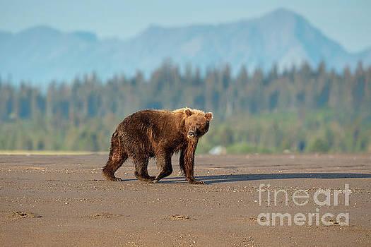 Out Of My Way - Lake Clark, Alaska by Sandra Bronstein