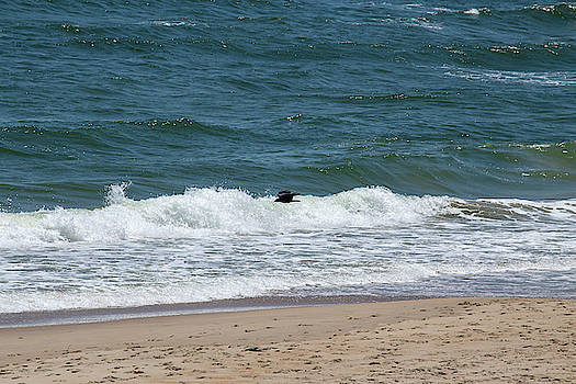 Outer Banks 24 by David Stasiak