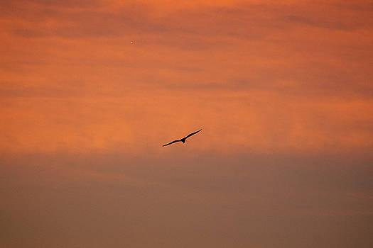 Outer Banks Sunrise 25 by David Stasiak