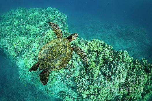 Over Puako Reef by Aaron Whittemore