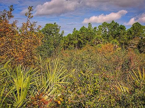 Overgrown Meadow by Scott Gunnerson