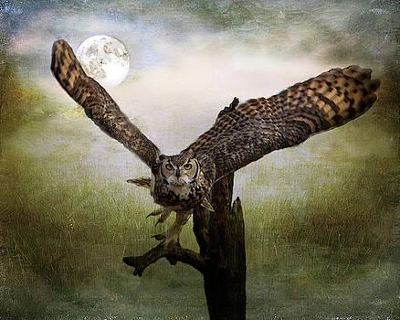 Barbara Manis - Owl and Moon