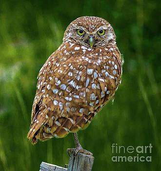 Owl by Debra Kewley