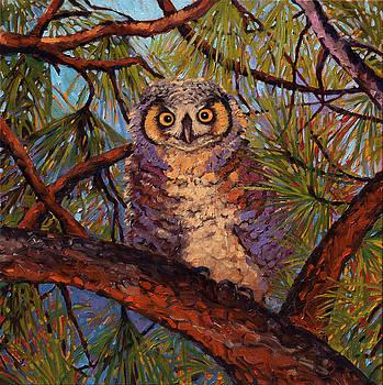 Owl Encounter by Rebecca Baldwin