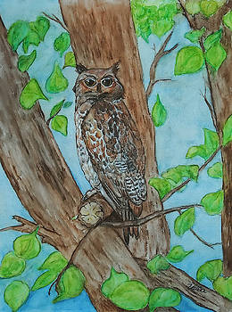 Owl in Our Tree by Vallee Johnson