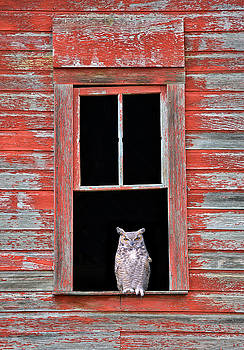 Owl Window by Leland D Howard