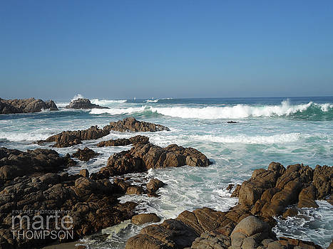 Pacific Grove Beauty by Marte Thompson