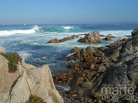 Pacific Grove Serenity by Marte Thompson