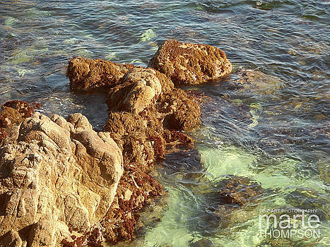 Pacific Grove Shallows by Marte Thompson