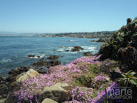 Pacific Grove Succulents by Marte Thompson